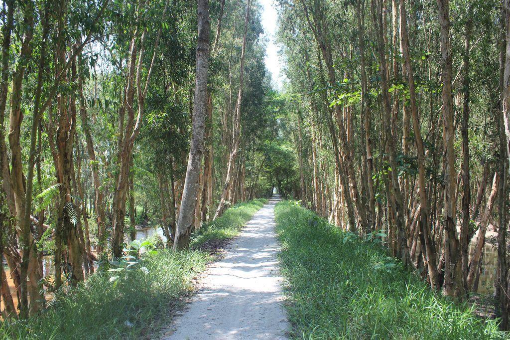 Дорога в лес Часу